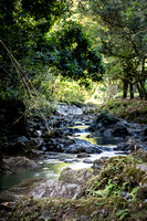 Ke'anae Forest Stream